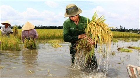 Hội Tịch Điền long trọng, nông dân được mùa vẫn lo
