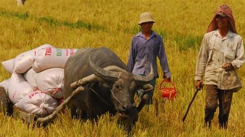 GS Võ Tòng Xuân: Lý do gạo Việt Nam thua kém Campuchia