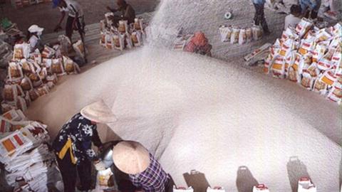 TS Alan Phan: Chính sách làm hại thị trường xuất khẩu gạo