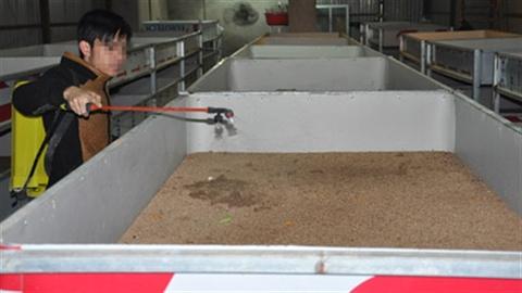 Nhân nuôi gián đất, Trung Quốc giúp Việt Nam làm giàu?