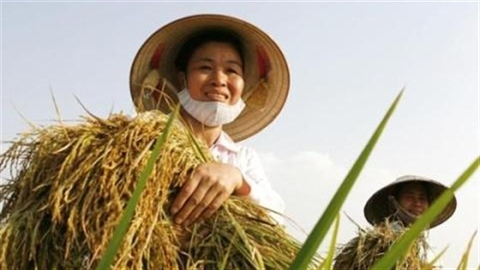 Hạ lãi suất người nông dân phải làm gì?