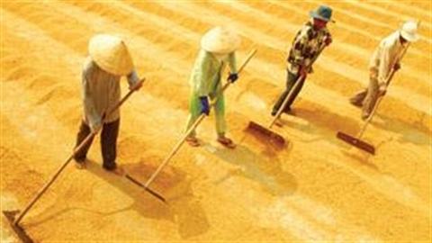 Cây lúa và chiến lược tăng trưởng mới