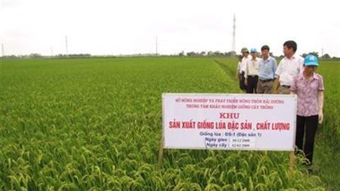 VN dư sức làm lúa đặc sản,giá gạo ở đáy vì ai?