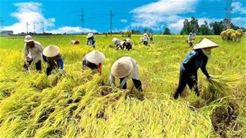 Muốn bán gạo phải qua tay 2 Tổng công ty lương thực!