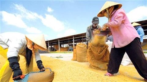 Nông dân Việt đang còng lưng để nuôi ai?