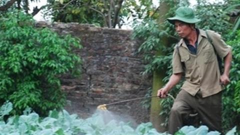 Cận cảnh nông dân uống thuốc trừ sâu thảo dược tự chế