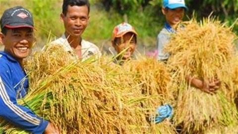 Thành tích xuất gạo: Áp chiêu bán rẻ-mua rẻ, nông dân khóc