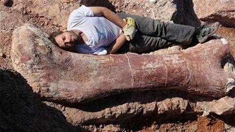 Tìm thấy hóa thạch khủng long to chưa từng thấy
