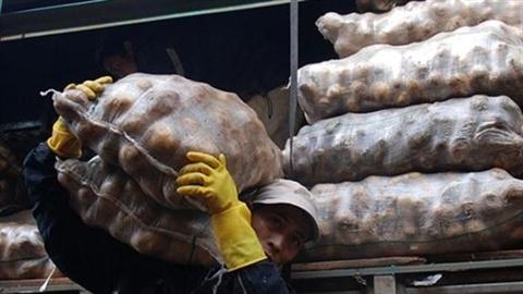 """""""Lột mặt"""" khoai tây Trung Quốc đội lốt khoai tây Đà Lạt"""
