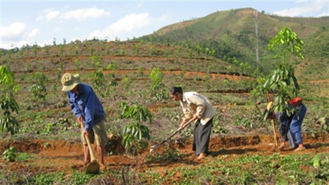 Cao su Tây Bắc: Trung Quốc trồng được, Việt Nam trồng được!?