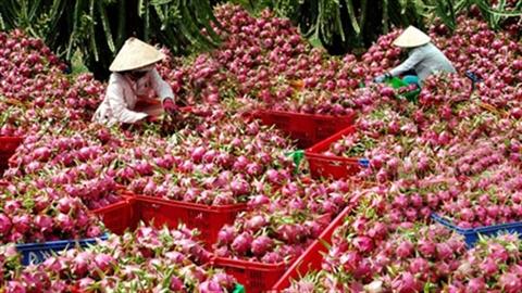 Trung Quốc tố thêm bánh kẹo, truy ngược Bộ Công thương VN