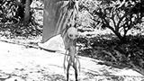 Sự thật về 'Người ngoài hành tinh ghé thăm Hà Nội'