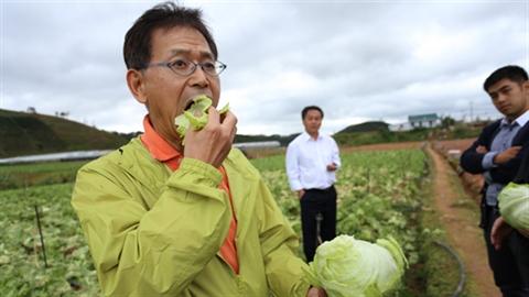 Nhật Bản dạy nông dân Việt trồng nông sản chất lượng cao