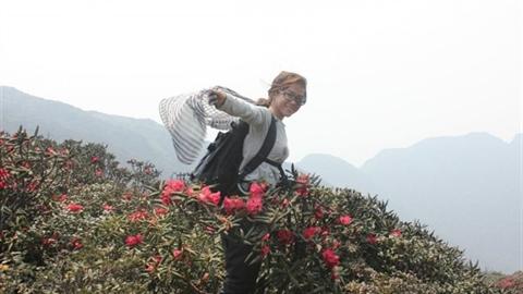 Thần dược hoa đỗ quyên chuyên trị bệnh phụ nữ