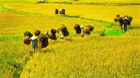 Việt Nam sáng tạo kém Lào:Thay đổi hay... ngả mũ nhận thua?