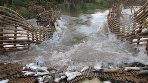 Việt Nam không ngăn chặn Lào xây dựng đập Don Sahong