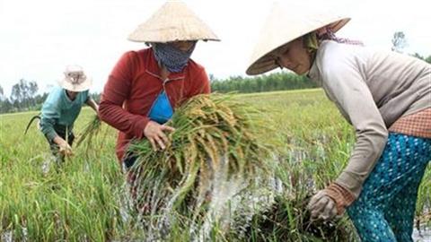 Việt Nam tăng trưởng carbon thấp để chống biến đổi khí hậu