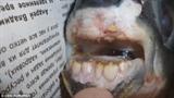 Bắt được cá có hàm răng như răng người