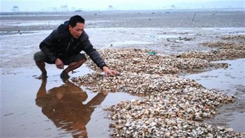 Khu vực cửa sông Hồng và hiểm họa biến đổi khí hậu