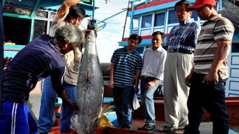 Câu cá ngừ kiểu Nhật:Cán bộ quan liêu hay ngư dân lười?