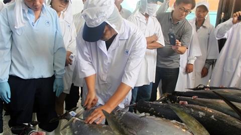 Câu cá ngừ kiểu Nhật: Bộ NN&PTNT phó mặc địa phương
