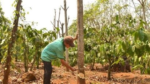 Đìu hiu nông nghiệp Việt:FDI giảm, doanh nghiệp nội sang