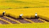 Thành tích nông nghiệp Việt: Nhập khẩu hết, trừ... đất, nông dân?