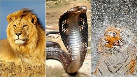 Hình ảnh tuyệt đẹp về những loài động vật nguy hiểm nhất hành tinh