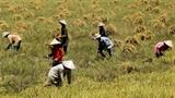 'Xuất khẩu' nông dân:Vì sao Việt Nam thất bại ở châu Phi?