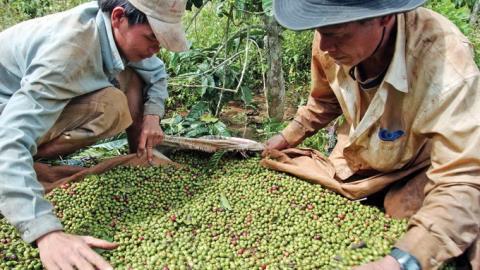 Xuất khẩu 'nông dân Việt': Tại sao không?