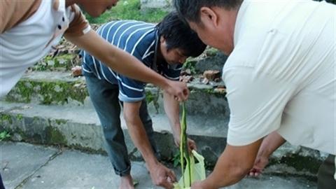 Cả làng đi bắt rắn lục đuôi đỏ bán cho chính quyền