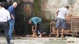 Cảnh lò mổ, giết chó tại Hà Nội lên báo Anh