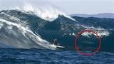 Vận động viên lướt sóng trị cá mập tò mò