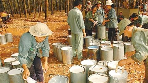 Sai phạm lớn tại Tập đoàn Công nghiệp Cao su Việt Nam