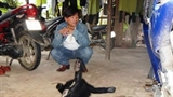 Quảng Bình: Nhặt voọc đang phân hủy về làm thịt nhậu