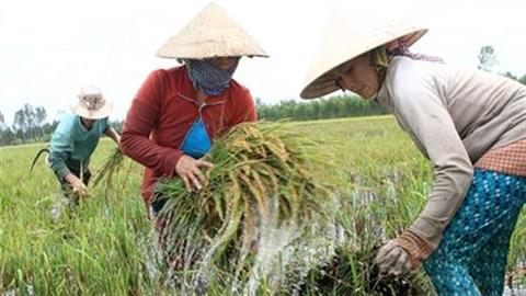 Nông nghiệp đối mặt với hiểm họa từ BĐKH