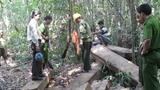 Đà Nẵng khởi tố vụ phá rừng cực lớn: Có bảo kê?