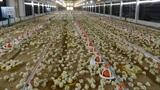 Nghịch lý nông nghiệp: Nông dân Việt sắp đứng đường?