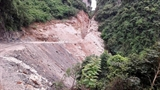 Xẻ núi Vịnh Hạ Long: Trồng cây thay núi đá
