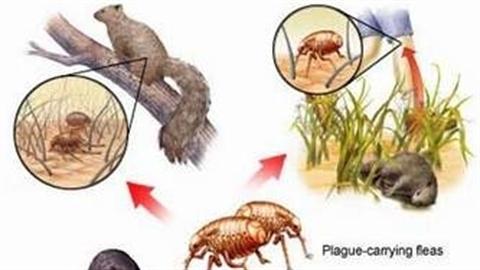 Những điều chưa biết về đại dịch