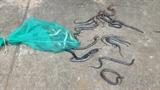 Ô tô chở hàng trăm con rắn thả xuống đường