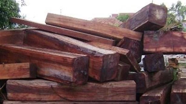 Nghi cty Dũng 'lò vôi' buôn lậu gỗ: Phó TGĐ thừa nhận