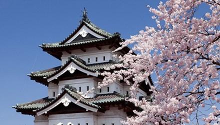 Đại sứ quán Nhật cảnh báo về những 'chiêu' lừa du học