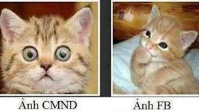 Chùm ảnh chế về mèo khiến những người nghiêm túc nhất cũng phải bật cười