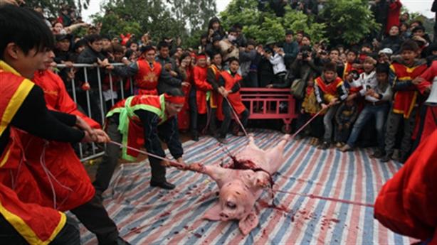 Lễ hội chém lợn: Nên bỏ, bỏ cả đâm trâu...