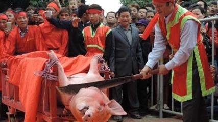Lễ hội chém lợn: Chém giữa đình, quy mô hơn