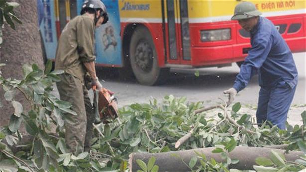 Chặt 6.700 cây xanh: Hà Nội không sai nhưng...