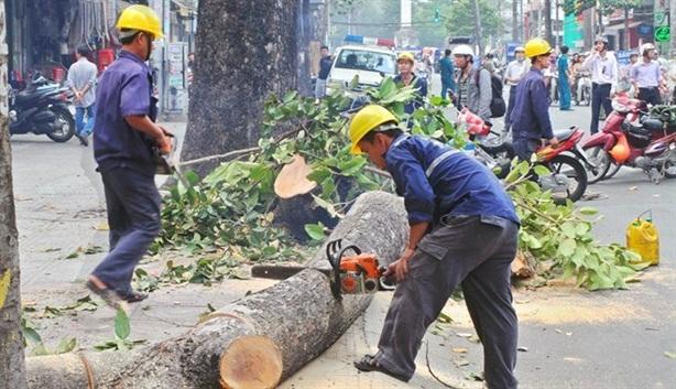 HN dừng chặt cây: Do tổ chức thực hiện thiếu minh bạch