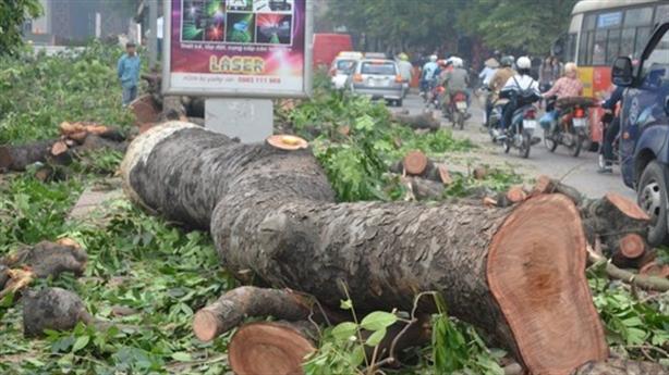 Hà Nội chặt cây: Những cán bộ nào bị đình chỉ?
