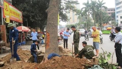 HN trả lời vụ chặt cây: Bảo vệ tính mạng người dân